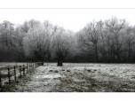 landscape_0008
