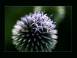 nature_0061