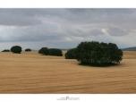 panorama_1_v2_1600