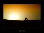 sundowner_0024