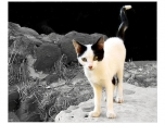 animals_0059