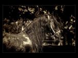 animals_xx0001